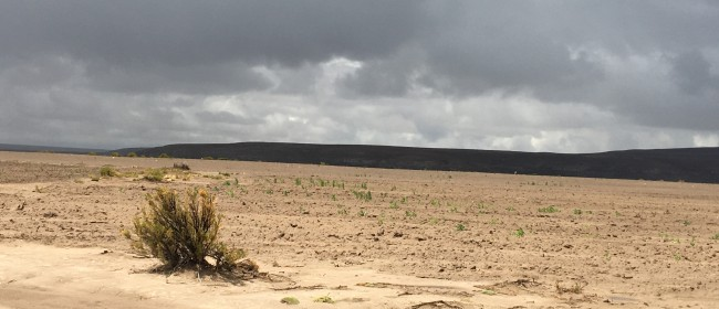 DAY 25 – Cash flow in the quinoa lands